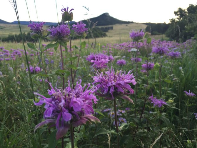 Purple Mountain Majesty - Spruce Mountain Trail - 7-25-15 - 4